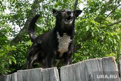 Разное. Курган, собака, злая собака, домашние животные, домашние питомцы, собака лает, собака на заборе