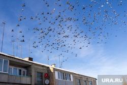 Село Париж Нагайбакского района. Челябинская область, птицы, стая птиц, голуби, многоквартирный дом