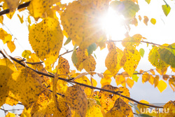 Клипарт. Нижневартовск, погода, бабье лето, желтые листья, солнце, осень