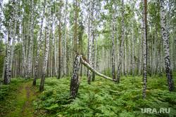 Обсуждение биатлонного центра на Московском тракте. Екатеринбург, лес, тропинка, упавшее дерево