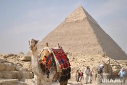 Клипарт, верблюд, пирамида, египет, Каир