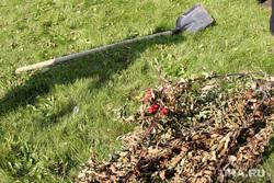 Субботник Курган, лопата, рябины