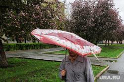 Дождь, непогода. Челябинск, погода, непогода, климат, весна, дождь, зонт, яблони цветут