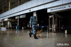Аэропорт Кольцово во время пандемии коронавируса. Екатеринбург, собака, аэропорт кольцово, кинолог, эпидемия, медицинская маска, полиция, covid-19, коронавирус, пандемия коронавируса