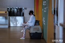 Аэропорт Кольцово во время пандемии коронавируса. Екатеринбург, собака, аэропорт кольцово, пассажир, эпидемия, коронавирус, пандемия коронавируса
