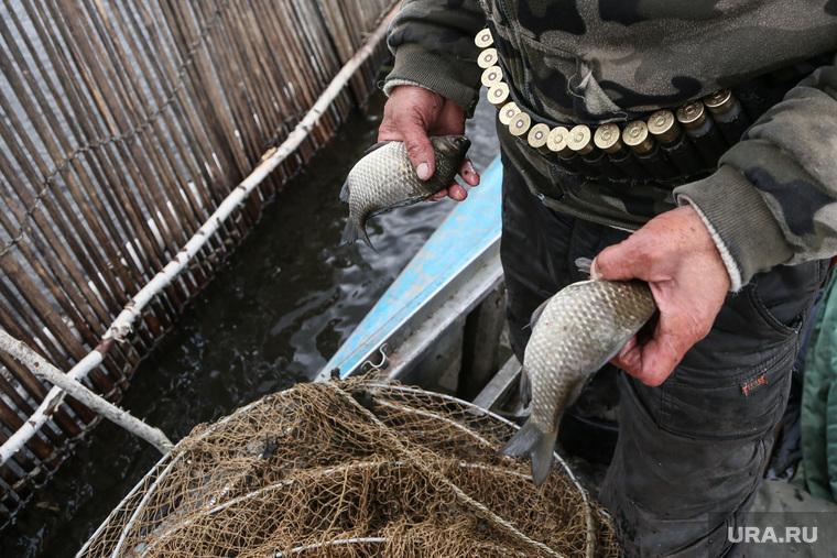 Рыба. Заболотье. Тюменская область, сеть, патроны, рыбак, карась, морда, рыболов, рыба, рыбалка, фитиль, рыболовство, патронтаж