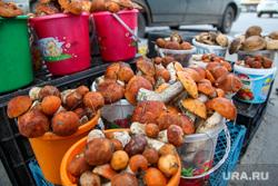 Грибы. Тюмень, грибы, продажа грибов, белые грибы
