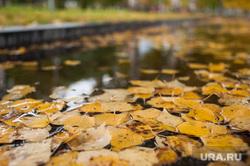 Виды Екатеринбурга, лужа, желтые листья, пасмурная погода, осень