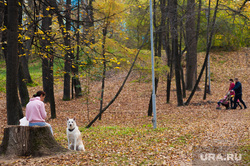 Виды Екатеринбурга, собака, прогулка, парк, листья, осень