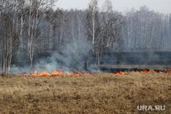 Поджег травы Шумиха, трава горит, пожар в лесу