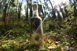 Микрорайон «Светлый» проект TEN, trashtag челлендж. Екатеринбург, деревья, лес, тбо, листья, солнце, лучи, закат, природа, осень, бутылка стеклянная