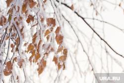 Клипарт. Ханты-Мансийск, зима, иней, заморозки