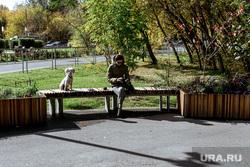 Сентябрь в Тюмени: парки, листва, деревья, прохожие. Тюмень, собака, сентябрь, осень