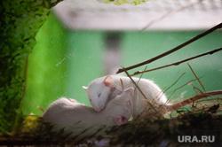 Новая экспозиция мелких зверей с разных частей света в Екатеринбургском зоопарке, зоопарк, грызун, экспозиция мелких зверей, крыса