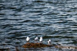 Шарташский лесопарк. Екатеринбург, озеро, река, чайки, шарташский лесопарк, вода