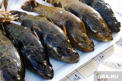Областная агропромышленная выставка «АГРО-2019». Продукты питания. Челябинск, продукты, рыба, еда, потребительская корзина, ротан