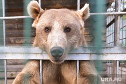Медведь. Челябинск., зоопарк, медведь есть чо