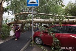 Упавшие деревья после урагана. Тюмень, ураган, штормовое предупреждение, автомобиль, сломанное дерево, шторм, упавшее дерево, дерево упало на машину