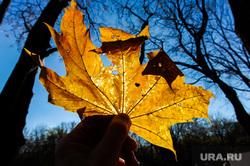 Золотая осень в кленовом парке. Челябинск, золотая осень, кленовый парк, кленовый лист