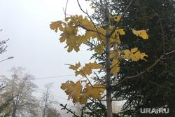Туман в городе. Челябинск, клен, городской пейзаж, климат, осень, туман