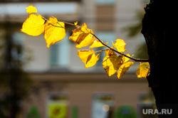 Золотая осень. Челябинск, погода, желтые листья, золотая осень, природа