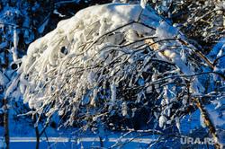 Хребет Зигальга, поселок Верхний Катав, Челябинская область, дерево в снегу