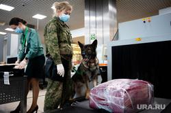 Ситуация в аэропорту Кольцово в связи с эпидемией коронавируса в Китае. Екатеринбург, аэропорт кольцово, таможенный контроль, собака кинолог