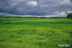 Природа ХМАО. Сургут, поле, пейзаж, природа, облака, небо, луг