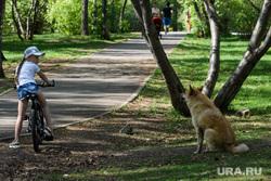 Сорок шестой день вынужденных выходных из-за ситуации с распространением коронавирусной инфекции CoVID-19. Екатеринбург, ребенок, собака, парк, девочка