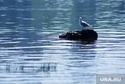 Виды Перми, море, река, птица, чайка, вода