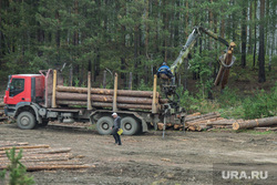 Клипарт. Екатеринбург, браконьер, лесоповал, бревна, древесина