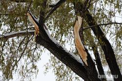 Клипарт по теме Погода. Челябинск., сломанное дерево