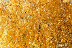 Осень. Тюмень, желтые листья, золотая осень