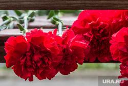 День подразделений специального назначения. Магнитогорск, гвоздики, память, траур, цветы