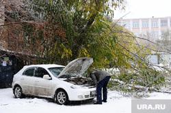 Клипарт по теме Погода. Челябинск., двор, машина, автолюбитель, капот, сломанное дерево