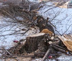 Срубленные деревья улица Володарского д 60. Курган., пень, вырубленные деревья