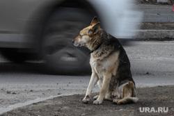 Виды города. Курган, бездомные животные, бездомная собака