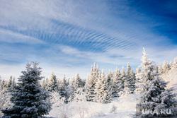 Клипарт. Сургут, зима, лес, облака, небо, природа, мороз
