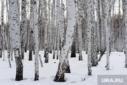 Подкормка косуль в Бродокалмакском заказнике.Челябинск, снег, зима, деревья, лес, березы