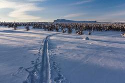 Природа Пермского края. Пермь, зима, лыжня, деревья в снегу, северный урал, горы зимой, тулымский камень