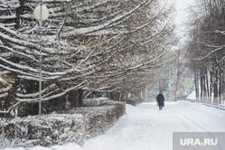 Снегопад, мороз, зима. Челябинск, аллея, снегопад, зима, алое поле, мороз