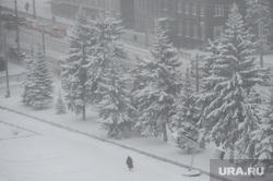 Мороз, зима. Челябинск, снег, холод, зима, погода, ели в снегу, климат, мороз, туман, метеоусловия