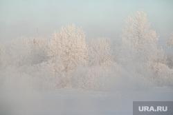 Морозные дни. Тюмень, снег, зима, деревья, деревья в снегу, зимний пейзаж, мороз, холод, снег на деревьях, снег на ветках