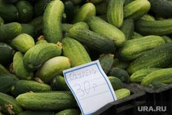 Открытие овощной ярмарки Курган, огурцы, овощная ярмарка, ценник