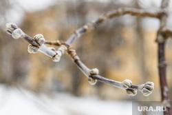 Виды Екатеринбурга, почки, весна, ветка дерева