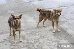 Дворняги. Собаки. Бродячие животные. Челябинск, собаки, бездомные животные, дворняги, бродячие животные