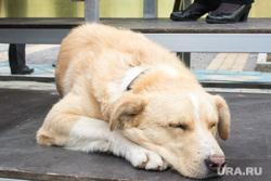 Новый Уренгой — Сеяха — Яр-Сале - командировка Кобылкина, собака, сон, спит