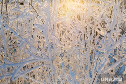 Морозные дни. Тюмень, снег, зима, деревья, деревья в снегу, мороз, холод, снег на деревьях, снег на ветках