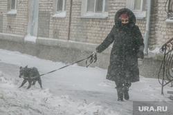 Город в снегу. Курган, снегопад, ветер, пурга, снег в городе, женщина с собакой