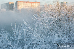 Морозные дни. Тюмень, снег, многоэтажка, многоэтажный дом, зима, деревья, деревья в снегу, дом, мороз, холод, снег на деревьях, снег на ветках